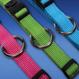 Dogs-Beltz-Reflective-Stitching-Gloryshot