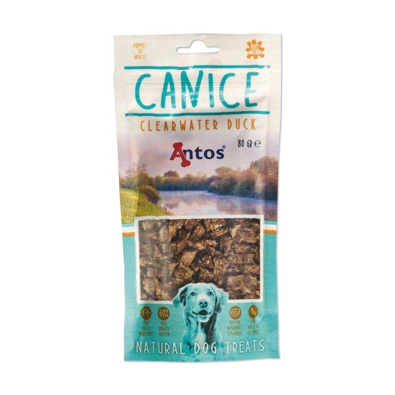 antos-canice-eend